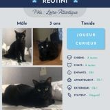 Reotini, Chat à adopter