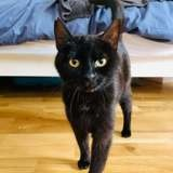 Deneb, Chat à adopter