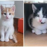 Prunelle et rouky, Chaton à adopter