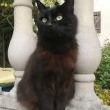 Shiki, Chat à adopter
