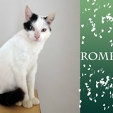 Romeo les beaux yeux, Chat à adopter