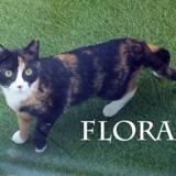 Flora très joueuse, Chat à adopter