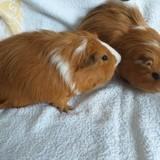 Alfafa et bibou, Animal à adopter
