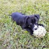 Ofi (réservé), Chiot à adopter