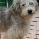 Boqueron, Chien à adopter