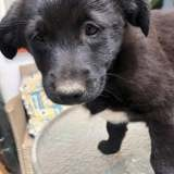 Shy, Chiot à adopter