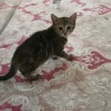 Lili, Chaton à adopter