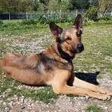 Byboo, jeune chien mâle croisé créole, Chien à adopter