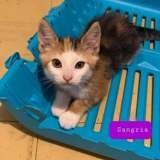 Bella, Chaton à adopter