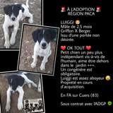 Luiggi, Chiot à adopter