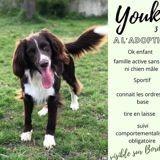 Youki, Chien berger australien à adopter