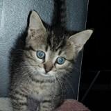 Miki, Chaton à adopter