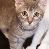 Spike, Chaton à adopter