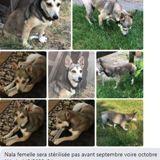 Nala, Chien à adopter