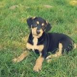 Sisko, Chiot à adopter