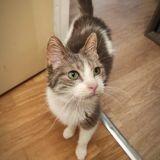 Booba, Chat à adopter