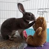 Twist, Animal à adopter