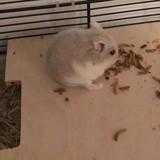 Yookie, Animal à adopter
