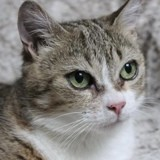 Loulou, Chat à adopter