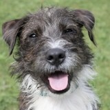 Georges, Chien à adopter