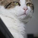 Totoro, Chat à adopter