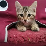 Scoop, Chaton à adopter
