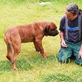 Othello, Animal fila brasileiro à adopter