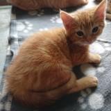 Sacha, Chaton à adopter