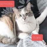 Sephora, Chat européen à adopter