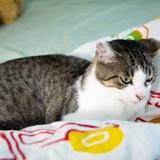 Hoshi, Chat à adopter