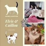 Elvis et caillou, Chaton à adopter