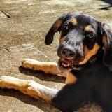 Loula, Chiot à adopter
