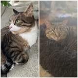Bianca et mouni, Chat à adopter