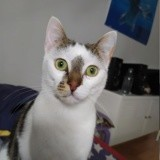 Ronet, Chaton à adopter