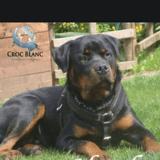 Harko, Chien à adopter