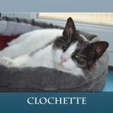 Clochette chat à genoux, Chat à adopter
