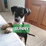 Sunny, Chiot à adopter