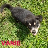 Vanie, Chiot à adopter