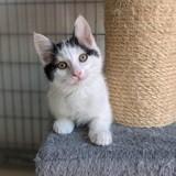 Shari, Chaton à adopter