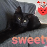 Sweety, Chaton à adopter