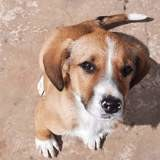 Yucca, Chiot à adopter