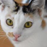 Siti, Chiot à adopter