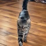Charlot, Chat à adopter