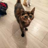 Athéna, Chat à adopter