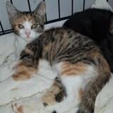 Lea, Chaton à adopter