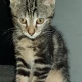 Mady, Chaton à adopter