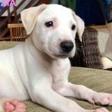 Zia, Chiot à adopter