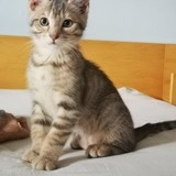 Parker, Chaton à adopter