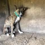 Kookie, Chiot à adopter