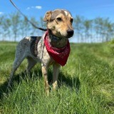 Amadeo, Chien à adopter